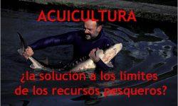 Acuicultura, ¿la solución a los límites de los recursos pesqueros?