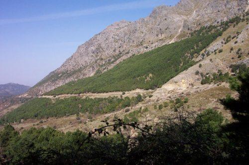 el Programa de Adaptación, que presta atención específica a sectores socioeconómicos críticos como la agricultura, el turismo o la salud y destaca la importancia de la conservación y mejora del patrimonio forestal de Andalucía.
