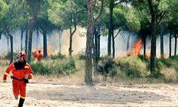 Consejos para evitar los incendios forestales