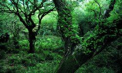 El Gobierno andaluz amplía en 5.852 hectáreas el Parque Natural de Los Alcornocales