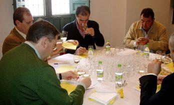 Cata de vinos ecológicos en una edición de Ecorracimos
