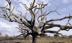 Andalucía, primera en poner en marcha el Plan de Acción por el Clima