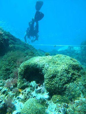 Muestreo de Cladocora caespitosa en la zona de estudio Acantilados y Fondos Marinos de la Punta de la Mona