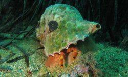 Aprobado el plan de recuperación y conservación de invertebrados y plantas fanerógamas del medio marino