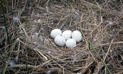 Los filtros solares han llegado a los huevos de las aves de Doñana