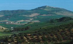 Ayudas agroambientales a los sistemas sostenibles de olivar