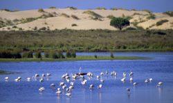 La ampliación de la zona marina de Doñana será en 2018