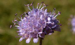Nueva especie de flora en el Espacio Natural de Sierra Nevada