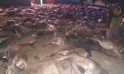 Exterminio de ciervos y de muflones en la finca Jarrama