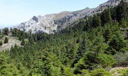 La Sierra de las Nieves como III Parque Nacional en Andalucía