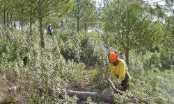 Medio Ambiente invierte en los últimos cinco años más de 31,7 M€ en trabajos de restauración forestal