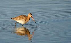 SEO/BirdLife urge a la aplicación de la normativa europea para abordar los problemas del agua