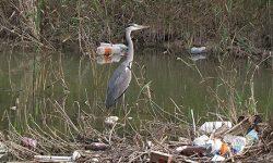 Libera propone el término basuraleza para poner nombre al problema ambiental del abandono de residuos en la naturaleza