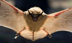 Murciélagos Cavernícolas
