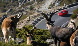 """WWF pide el rescate de las """"autopistas salvajes"""" para conectar la naturaleza"""