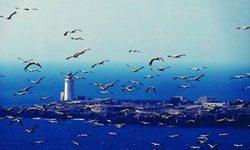 El III Congreso Internacional sobre Migraciones de Aves y Cambio Global tendrá como sede Tarifa