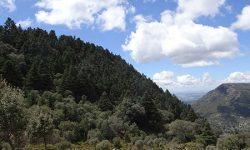 Ecologistas en Acción solicita la expropiación de un pinsapar en el Parque Natural Sierra de Grazalema