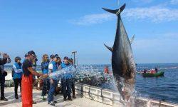 Sánchez Haro reclama aumentar las capturas de atún rojo en 2019