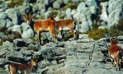 La Sierra de las Nieves acogerá la sede del congreso de Europarc-España 'Esparc 2020'