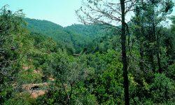II Plan de Desarrollo Sostenible del P. N. de los Montes de Málaga