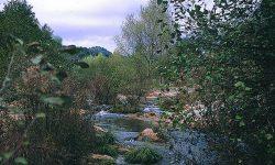 La Junta aprueba un plan director contra la fragmentación de los ecosistemas en Andalucía