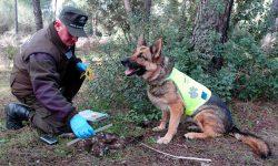 El equipo canino de detección de cebos envenenados realiza desde su creación 3.436 inspecciones