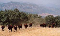 Nuevo pago de 32 millones de ayudas para la agricultura y la ganadería ecológicas