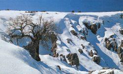 Aprobada la propuesta definitiva para la declaración de la Sierra de las Nieves como Parque Nacional