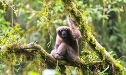 157 nuevas especies descubiertas en el Gran Mekong