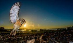 SEO/BirdLife presenta los ganadores de FotoAves 2018