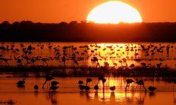 WWF destaca las cinco principales amenazas  para Doñana