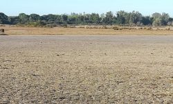 Seo/BirdLife reclama un plan urgente ante la falta de agua en Doñana