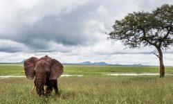 Las poblaciones de fauna salvaje han caído una media del 68% desde 1970