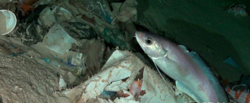 Oceana pedirá al Congreso reforzar la Ley de Residuos para atajar la crisis del plástico en el mar