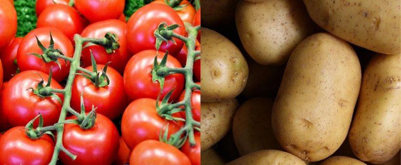 EL POMATO: mitad patata y mitad tomate