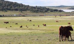 Ayudas agroambientales a la ganadería extensiva