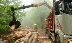 Nueva Estrategia Forestal Europea