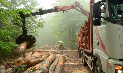 WWF lamenta que la CE apruebe la nueva Estrategia Forestal condicionada por intereses cortoplacistas.