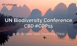 Cumbre de biodiversidad COP15: ¿La última oportunidad?