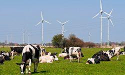 74% de la electricidad renovable en 2030